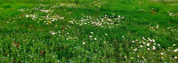 Primavera_parco_Sempione