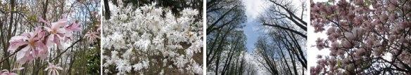 Primavera_Sempione