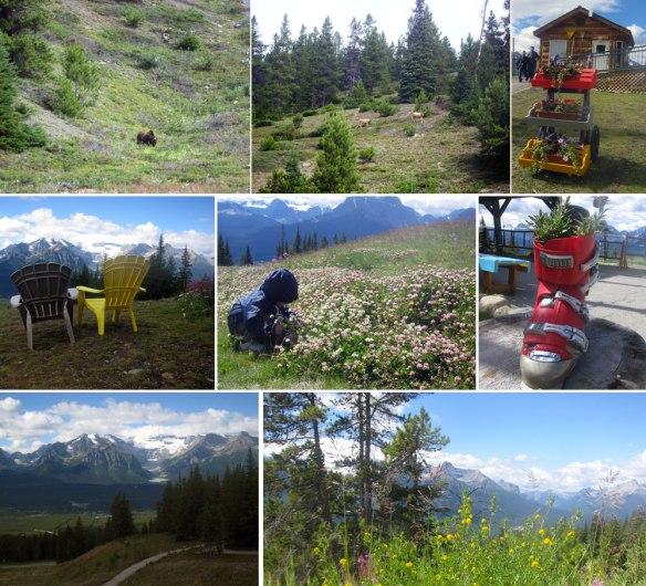 Banff National Park - Mt. Whitehorn