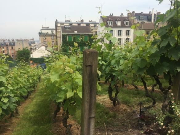 Le vigne di Montmartre - Parigi