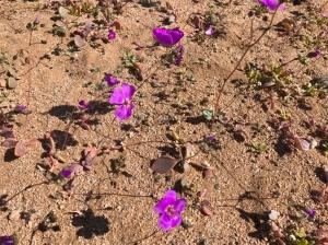 Desierto Florido - Route 5