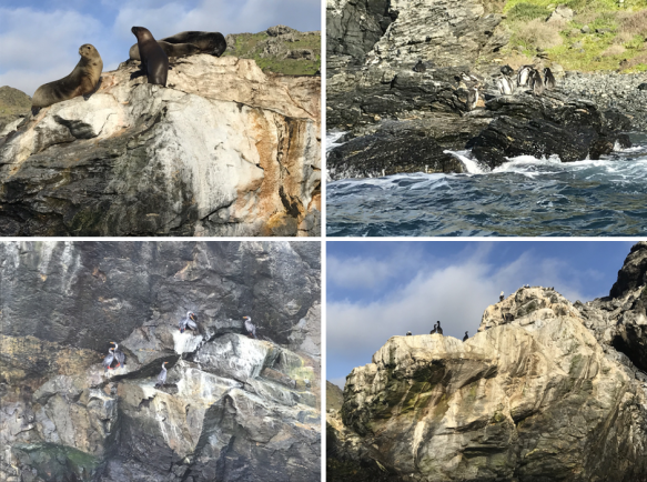 Reserva Nacional Pingüino de Humboldt - Isla Chorros