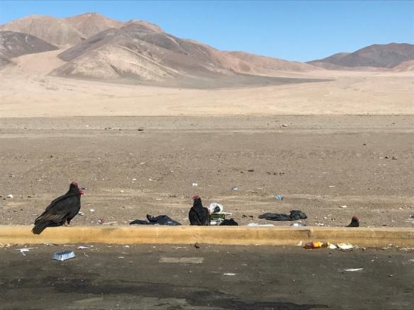 Route 5 - Da San Pedro a Valparaiso